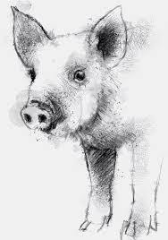 drawn boar sketch pencil color drawn boar sketch