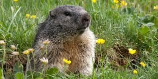 groundhog holiday animals peta