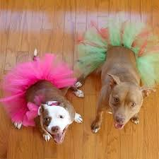 american pitbull terrier a legacy in gameness 71 best fabulous pitbulls images on pinterest nanny dog vintage