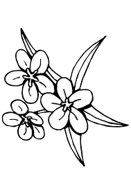 90 dessins de coloriage libellule a imprimer gratuit à imprimer