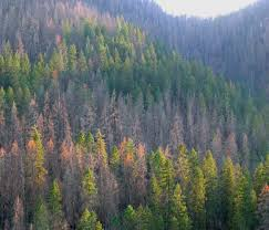 ensuring healthy forests for future generations crag law center