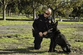 belgian malinois in movies pleasanton police introduces newest k9 vader