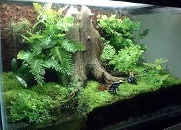 290 best terrariums images on pinterest vivarium reptile cage