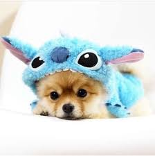 in costumes 30 happiest facts costumes dog and animal