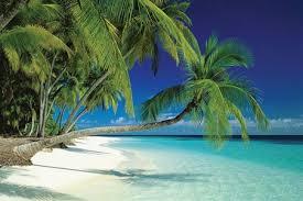 maldives and sea palm trees on a tropical island paradise