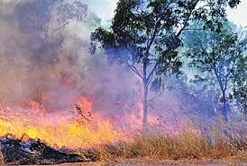 Tropical Savanna Dominant Plants - savanna explorer all regions northern australia plants