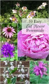 5 favorite flowers for the garden perennials and garden ideas