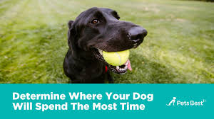 new dog owner u0027s guide pets best tips for bringing your new dog home