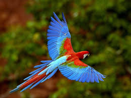Parrot Decorations Home Birds Of The Jungle And Rainforest Get To Know About Parrots