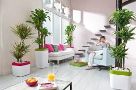 home interior plants beautiful indoor plants how to decorate your home with easy care plants