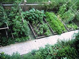 small vegetable garden layout design backyard image landscaping