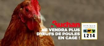 siege thiriet maltraitance animale de nouvelles avancées pour les poules en cage