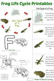 frog activity sheet labeling a northern leopard frog beginner