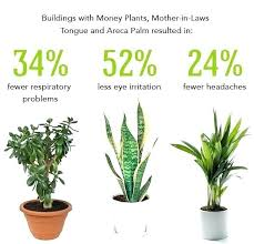 plants for office best plants for office best plants for office best indoor plants