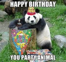 Funny Animal Birthday Memes - you party animal funny happy birthday meme
