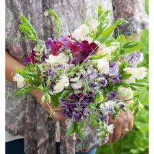 browse fragrant colourful sweet pea seedlings sarah raven