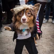 tompkins square halloween dog parade photos tompkins square
