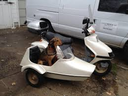 just picked up a 250 elite with a sidecar for the dog scooters