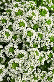 Heat Resistant Plants 13 Rabbit Resistant Annuals Hgtv