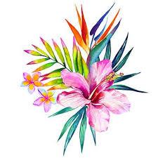 the 25 best hawaiian flowers ideas on pinterest pretty flowers