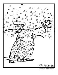 snow owl coloring animal jr
