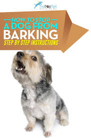 how to train dog to stop barking best 25 stop dog from barking ideas on pinterest stop dog
