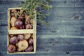A Root Vegetable - free photo vegetables harvest cultivation free image on
