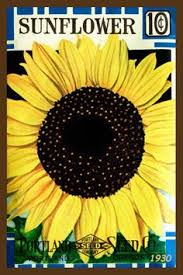 sunflower seed packets vintage seed packet clipart 50
