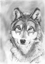 22 best wolf pencil drawing images on pinterest wolf drawings