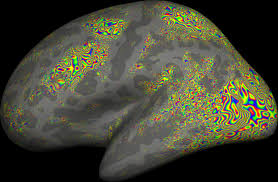 Human Brain Mapping Marty Sereno