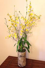 yellow orchids yellow oncidium orchid in birch container silk thumb