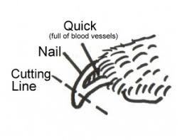 how to trim your dog u0027s nails