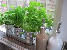 lovely idea small kitchen herb garden 15 phenomenal indoor herb