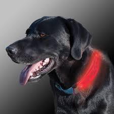 Light Up Dog Collar Coon Hunting Lights Led Hunting Lights U0026 Dog Locator Lights