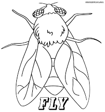 fly coloring page fly coloring pages free coloring pages sheets 12267
