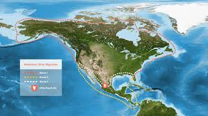 ancient sea otters circumnavigated north america 6 million years