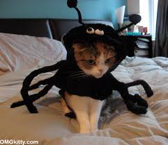 omgkitty oh no scary spider cat happy halloween