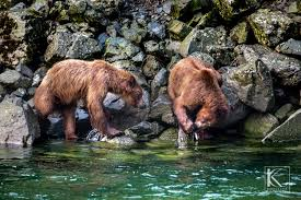 Alaska Wildlife Tours images Chilkoot lake nature and wildlife viewing rainbow glacier adventures jpg