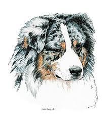 australian shepherd san diego kathleen sepulveda artwork for sale san diego ca united states