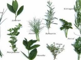 herbe cuisine daregal organise un chionnat des herbes aromatiques culinaires