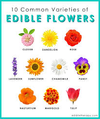 edible photo edible flowers at the intersection of nutrition and culinary arts