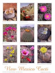 southwest native plants posters u2013 native plant society of new mexico