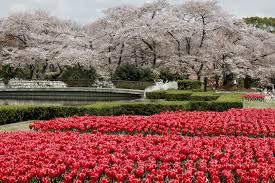 beautiful kyoto gardens u2013 japan world for travel