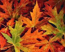 gene s green leaves change color each fall because of