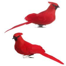 cardinal ornaments rainforest islands ferry