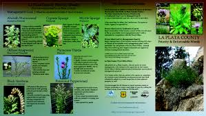 programs natural resources weeds and weed management la plata county