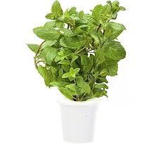 52 best click u0026 grow images on pinterest herb garden herbs