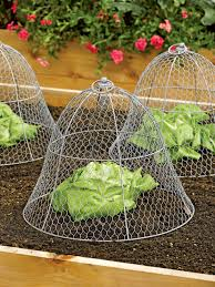 chicken wire cloche casa u0026 campo pinterest colonial gardens