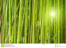 Forest Green by Green Bamboo Forest Royalty Free Stock Photo Image 21746065