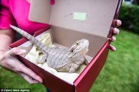 Seeking Episode 1 Lizard Cheshire Shocked As Pet Lizard Comes Back From Dead Daily